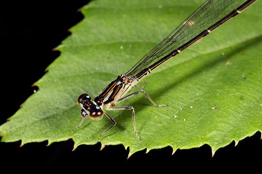 Damselfly, Leaf, Dragonfly, Nature, Insect, Wings