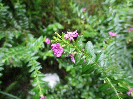 Chameleon, Blossom, Nature, Flower, Bloom, Plant