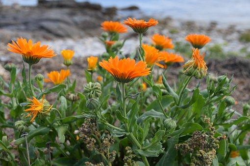 Flowers, Flowers Color Orange, Orange Petals