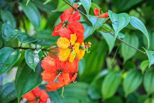 Green, Botanical, Malaysia, Asia, Wild, Hell, Gift