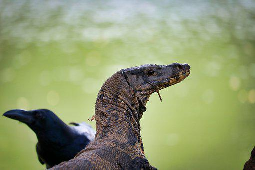 Bangkok, Thailand, Dangerous, Animal, Lizards, Head