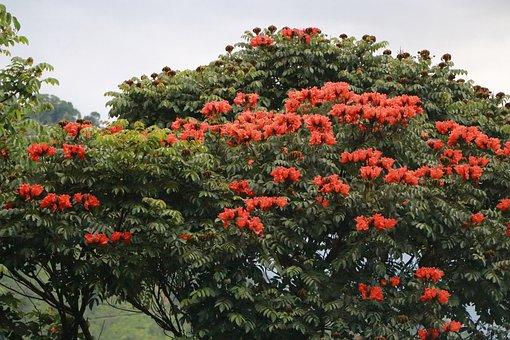 Tree, Nature, Flowers, Green, Leaves, Sky, Wood