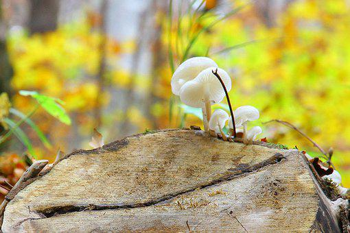 Autumn, Forest, Log, Fall Leaves, Nature, Leaves