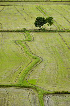 Field, Rice, Nature, Asia, Agriculture, Thailand