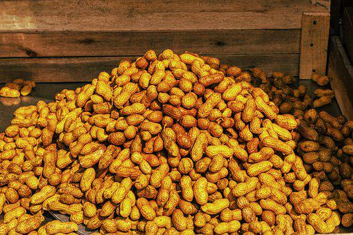 Peanut, Many, Brown, Kitchen, Cook, Plant, Starter