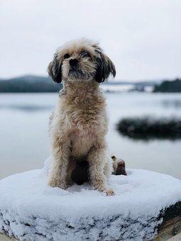 Dog, Animal, Pet, Cute, Portrait, Puppies