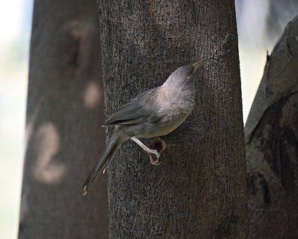 Bird, Sitting, Nature, Animal, Branch, Plumage, Small