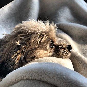 Dog, Animal, Pet, Puppy, Cute, Animal Portrait, Mammal