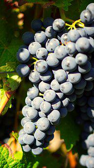 Grapes, Wine, Rebstock, Winegrowing, Vine, Fruit