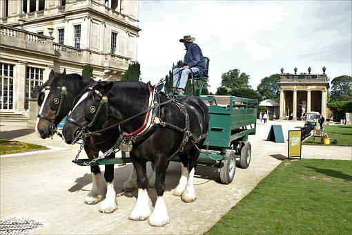 Horses, Ride, Mare, Carriage, Black, Beautiful