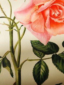 Roses, Pink, Romantic, Beauty, Wild Rose, Garden