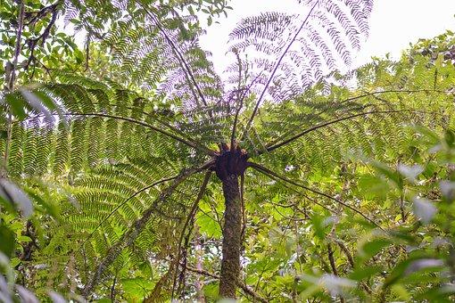 Costa Rica, Jungle, Nature, Tropical, Tropicale