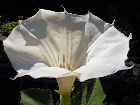 Blossom, Bloom, White, Flower, Plant, Garden