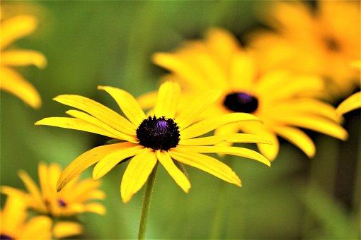 Flowers, Yellow, Walk In The Park, Hh, Hamburgensien