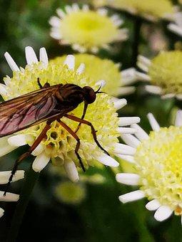 Animal, Flower, Wild, Insect, Garden, Plant, Summer