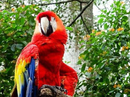 Ara, Red, Parrot, Portrait, Costa Rica, Close-up