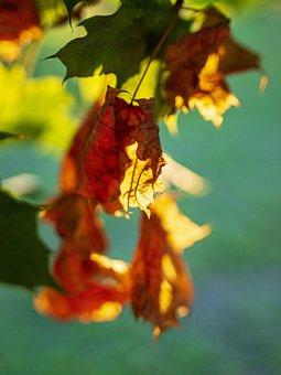 Autumn, Leaves, Autumn Colours, Nature, September