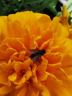 Flower, Yellow, Fly, Insect, Summer, Nature, Blossom