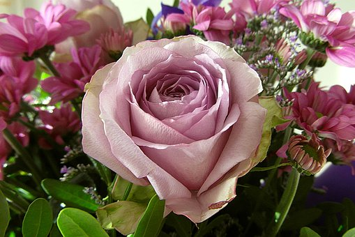 Rose, Bouquet, Flowers, Color, Pink, Clear, Card