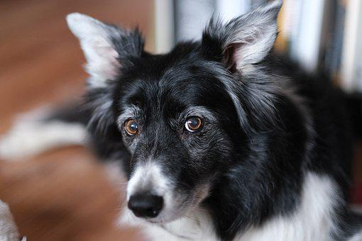 Nose, Dog, Animal, Eyes, The Head Of The, Attentive