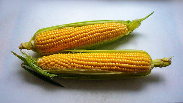 Ear Of Corn, Leaves, Light Background, Corn, Corn Cobs