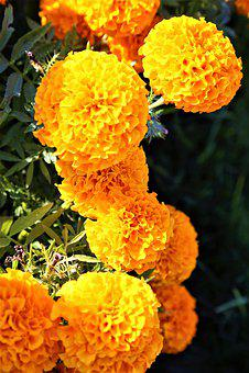Flowers, Nature, Yellow, Landscape, Beautiful, Flower