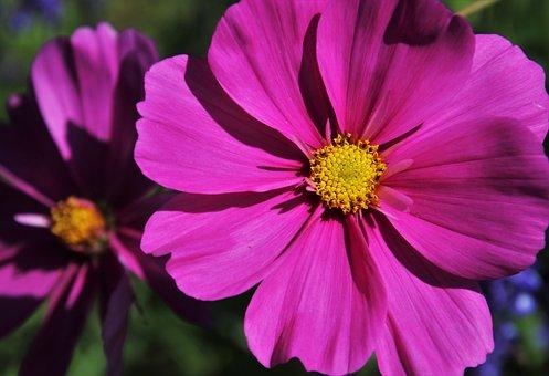 Flower, The Petals, Garden, Boost, Lit, Plant, Hdr