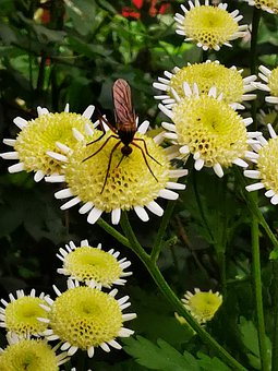 Insect, Flower, Plant, Nature, Blossom, Bloom, Garden