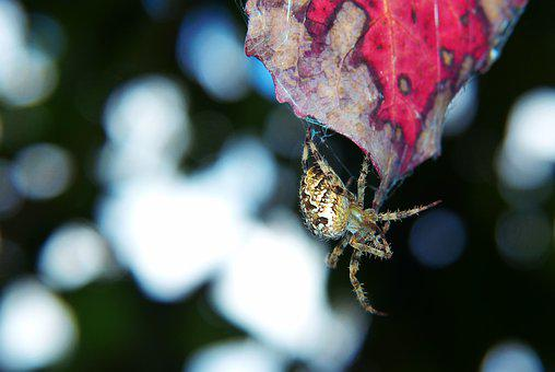 Signs Of Autumn, Leaf, Forest, Spider, Cobweb, Bokeh