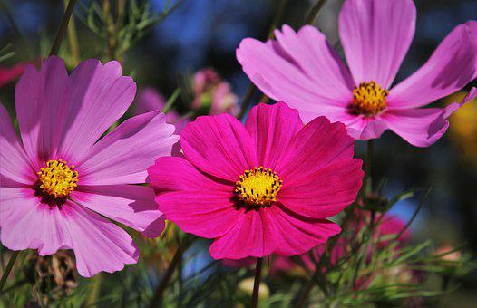 At The End Of The Year, Magenta, Meadow, The Petals