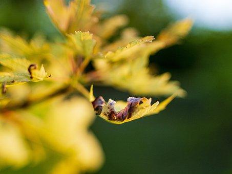 Autumn, Leaves, September, Fall, Nature, Foliage, Maple