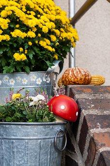 Autumn, Asters, Mushroom, Fly Agaric, Pumpkin, Corn