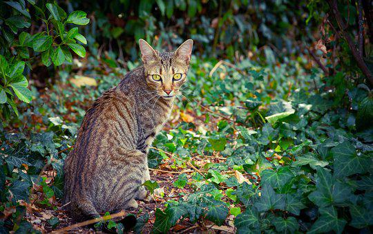 Cat, Ride, Feline, Nature, Predator, Portrait, Cute