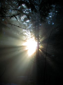 Light, Rays, Forest, Mood, Nature, Sun, Darkness