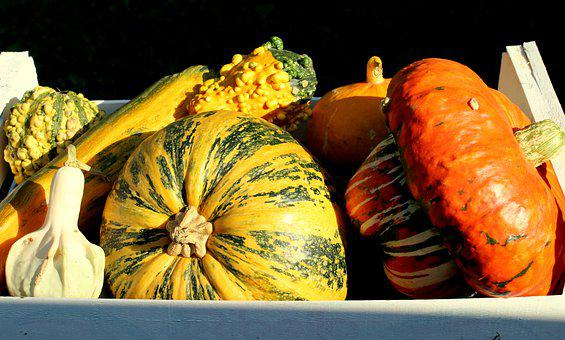 Pumpkins, Collections, Autumn, Orange, In The Sun