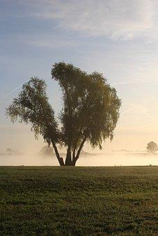Tree, Nature, Landscape, Fog, Scenic, Sunlight