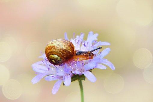 Snail Zaroślowy, Molluscum, Flower, Posts, The Petals