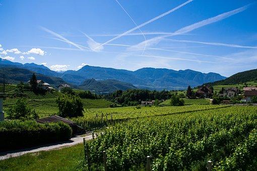Vineyard, Mountain, Mountains, South Tyrol, Alpine
