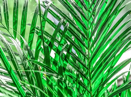 Leaves, Palm, Sunlight, Wallpaper, Background, Green