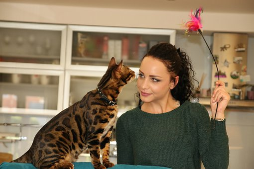 Girl, Girl With Cat, Bengal Cat, Cat, Pet, Witch, Woman