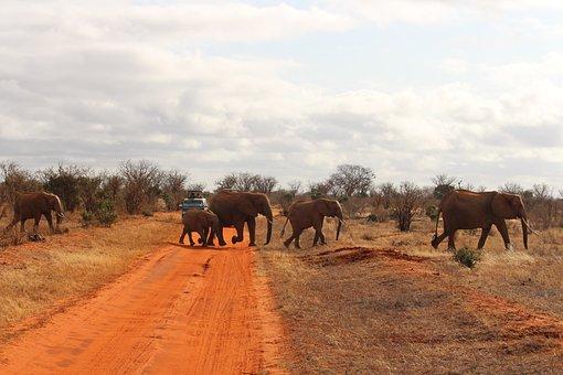 Elephant, Africa, Safari, Tsavo East, National Park