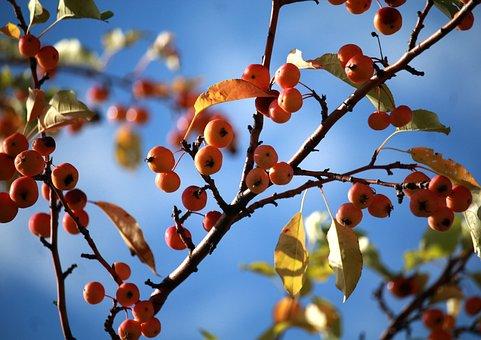 Apples, Sky, Autumn, Apple, Nature, Tree, Garden