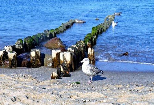 Sea, North Sea, Gulls, Bank, Groynes, Water, Holzbuhnen