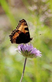Butterfly, Moth On A Flower, Flower, Plant, Leaf
