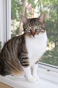 Cat, Window, Beautiful, Watch, Colorful, Pat