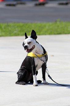 Dog, Dog Smile, Smile, Happy, Puppy, Cute, Pet, Animal