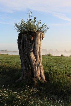 Tree, Elbe Valley, Elbtalaue, Elbe Beach, Tribe, Wood