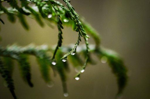 Fern, Green, Nature, Plant, Leaf, Leaves, Forest
