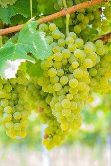Grapes, Green, Fruit, Grapevine, Autumn, Eat, Healthy