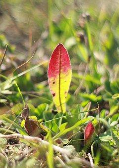 Grass, Sheet, Green, Leaves, Nature, Herbs, Botanica